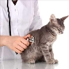 Ветеринарные клиники в Пачелме